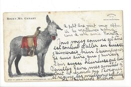 18116 - Souvenir Of The Rocky Mountains Mt Canary Âne Souriant Circulée 1902 - Rocky Mountains