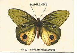 CHOCOLAT CASINO - PAPILLONS - HETERE PHILOCTETE - Autres