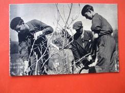 Cpa Propagande De Pétain - Dans Un Centre De Jeunes Travailleurs, Greffe Et Jardinage - écrite En 1941 - Guerre 1939-45