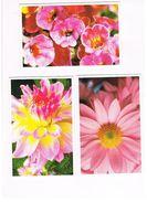 ITALIA    -  FIORI (FLOWERS)   LOT OF 3 - MINT - Fleurs