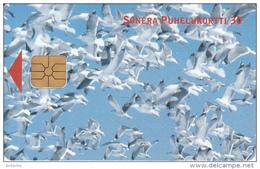 FINLAND - Birds, Sonera Telecard, Tirage 60000, 07/00, Used - Finlandia
