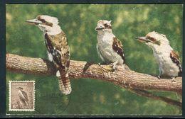 Australie - Carte Maximum 1954 - Oiseaux - Cartoline Maximum