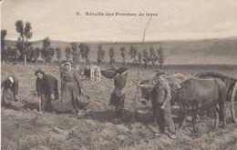 Récolte Des Pommes De Terre - Cultures