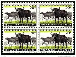 Ruanda 0206**x4 - 20c Buffles  MNH - Ruanda-Urundi