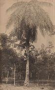 Photo Afrique Congo Palmier Recolte  Provenance Des Huileries Du Congo Belge Lever House - Africa