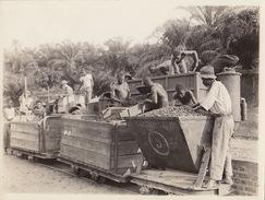 Photo Afrique Congo Alberta Train Chargement Récolte Provenance Des Huileries Du Congo Belge Lever House - Africa
