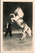"""L40B005 - Artiste De Radio Circus - """"Oural"""" - Cheval Cabreur Présenté Par AL Gruss - - Cirque"""