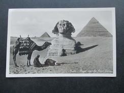 AK Echtfoto 1933 Ägypten Cairo Prayer Near The Great Sphinx. Kamel / Gebet. Gesendet Nach Hamburg - Kairo