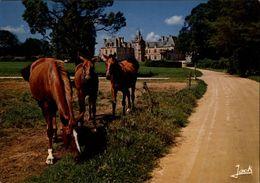 29 - PLOUVORN - Chateau - Cheval - France