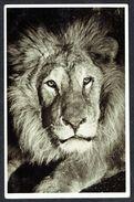 LIONS - LÖWE (2) - Non Circulé - Not Circulated  - Nicht Gelaufen. - Lions