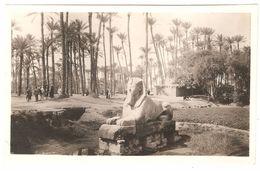 Memphis - Sphinx - Originele Foto / Photo Originale - 10,9 X 6,8 Cm - Gizeh
