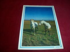 THEME ° LES CHEVAUX  / CHEVAL  ° IMAGE DE PROVENCE EN FRANCE - Horses