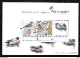 Nederland 2017 Vogels, Birds, Wintervogels; Kramsvogel, Buizerd, Smient, Fieldfare, Buzzard, Widgeon,  Foto A. Ten Hoeve - Periode 2013-... (Willem-Alexander)