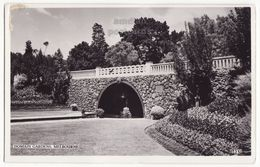 Melbourne Australia, Domain Gardens View C1920s Vintage Real Photo Postcard RPPC M8802 - Melbourne
