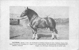 """29 - PLOUGOULM - Isidore SEVERE ELEVEUR à PLOUGOULM - PONPLAINCOAT- CHEVAL - ALLEZAN """"LUTTEUR""""  - 1936 - VOIR DEUX SCANS - Autres Communes"""