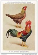 KBIN / IRSNB - Ca 1950 - Pluimvee, Oiseaux De Basse-cour, Poultry, Chicken (perfect Condition) - 26 - Oiseaux
