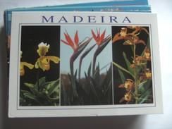 Portugal Madeira Nice Flowers - Madeira