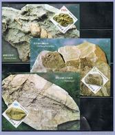 NORTH KOREA 2013 FOSSILS MAXICARDS - Fossils