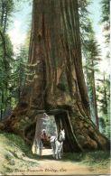 N°59182 -cpa Big Trees Yosemite Valley - Etats-Unis