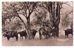 (Afrique) 062, AEF, Victor Simarro 191, Troupeau De Buffles Sauvages - Ohne Zuordnung