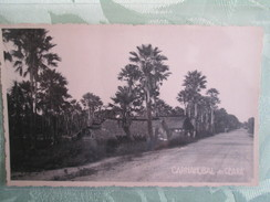 Carnahubal Do Ceara - Brésil