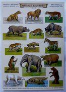 CPM SUJETS A DECOUPER H BOUQUET ANIMAUX SAUVAGES - Tierwelt & Fauna