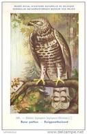 KBIN / IRSNB - Vogels / Oiseaux - 1943 - 107 - Buteo Lagopus, Buse Pattue, Ruigpootbuizerd, Rough-legged Buzzard - Oiseaux