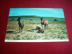 THEME ° LES CHEVAUX / CHEVAL ° NEW FOREST PONIES   / GRANDE BRETAGNE LE 15 05  1960 - Horses