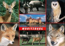 Ansichtskarte Moritzburg Wildgehege 1995 - Moritzburg