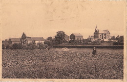 Nil Saint Vincent Panorama - Walhain