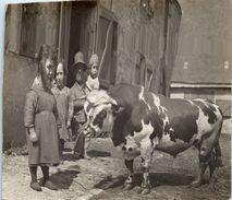 MEMBROLLES - Ferme - Carte Photo  Animal - Vache (tampon Au Dos De Chateaudun Maison Albert Photo) - Fermes