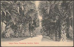 Talipot Palms, Peradeniya Gardens, Kandy, Ceylon, C.1910 - Plâté Postcard - Sri Lanka (Ceylon)