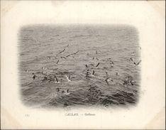 Campagne DUGUAY-TROUIN 1902-1903 - Voilier - Expédition - PEROU - CALLAO - Goëlands - Oiseaux - Pérou