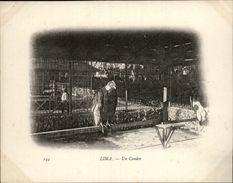 Campagne DUGUAY-TROUIN 1902-1903 - Voilier - Expédition - PEROU - LIMA - Jardin Public - Condor - Rapace - Pérou
