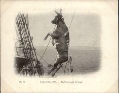 Campagne DUGUAY-TROUIN 1902-1903 - Voilier - Expédition - CHILI - TALCAHUANO - Embarquement De Boeufs - Chili