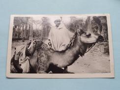 Scenes & Types - Jeune Chamelier ( 2023 ) Anno 1949 ( Zie Foto Voor Details ) !! - Algérie
