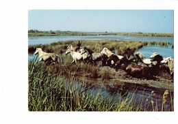 Cpm - Camargue - Chevaux Dans Les étangs - SL 10098 Cliché Dupont Explorer - Chevaux