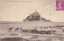 CPA Mont St Michel, Moutons Dans  Les Grèves, Moutons, Schapen, Sheep (pk40261) - Le Mont Saint Michel