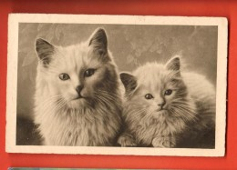 MIR-18 Lot De 2 Cartes-photo  Différentes De Deux Chats. Les Deux Cartes Ont Voyagé En 1932 En Suisse. Voir 2 Scans - Cats