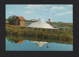 -  PORTUGAL AVEIRO 1960 Years  Postcard SALT SHORES SALINES SAL SALINES  - - Postcards
