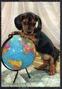 Chien (Basset ?) - Dog - Hund - Circulé Sous Enveloppe - Circulated Under Cover - Gelaufen U. Umschlag - Chiens