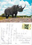 CPSM/gf  Animaux. African Wild Life. RHINOCEROS. ..A362 - Rhinocéros