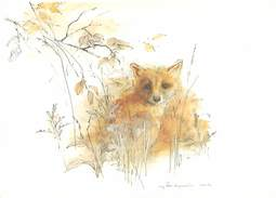 Illustration Renards Signé  U 586 - Animaux & Faune