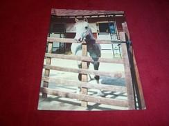 THEME ° CHEVAUX  / CHEVAL  °  FINLANDE  LE 26 02 1993 - Horses