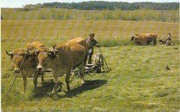 LOT DE 10 CARTES SUR L AGRICULTURE ET MARECHAL FERRANT - 5 - 99 Cartes