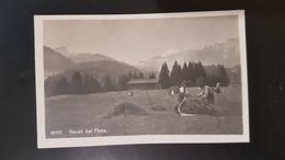 Heuet Bei Flims - GR Graubünden