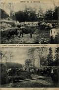 33 LANDES DE LA GIRONDE TROUPEAU DE VACHES GUILLIERE 12626 - France