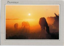 CHEVAUX  Cavalli Horses   Coucher Du Soleil En Provence - Cavalli