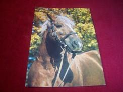 THEME ° LES CHEVAUX / CHEVAL° POLOGNE  / POLSKA   °° SUDECKIE STADO OGIEROW KSIAZ MAGNAT  LE 16 02 1999 - Horses