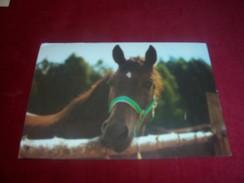 THEME ° LES CHEVAUX / CHEVAL° POLOGNE  / POLSKA °  LE 2 12 1998 - Horses